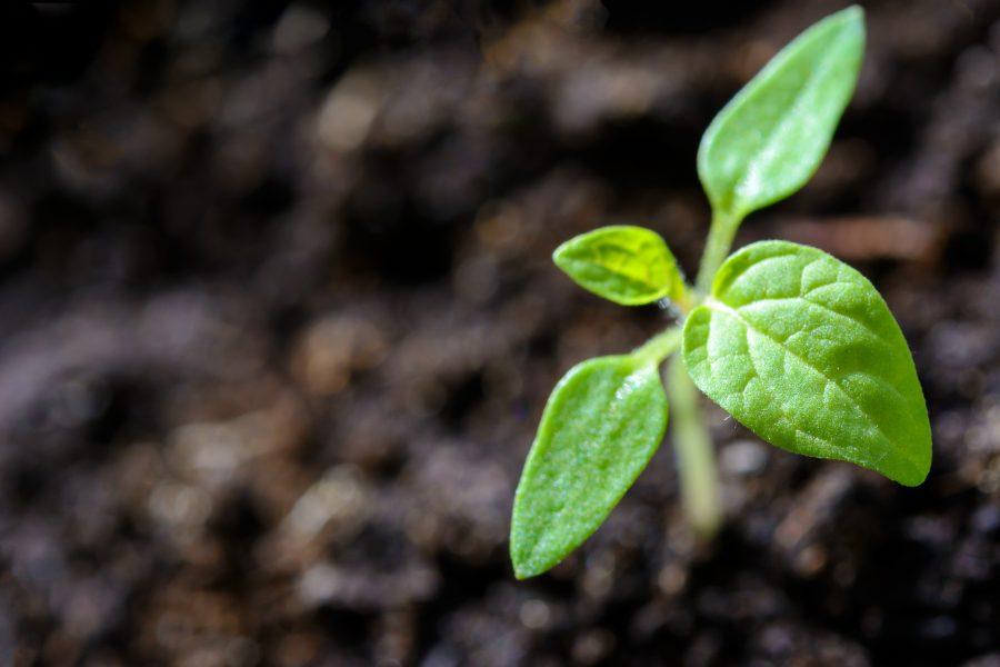 Soil, Seeds, and Sun